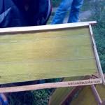 Bingkai Sarang Lebah