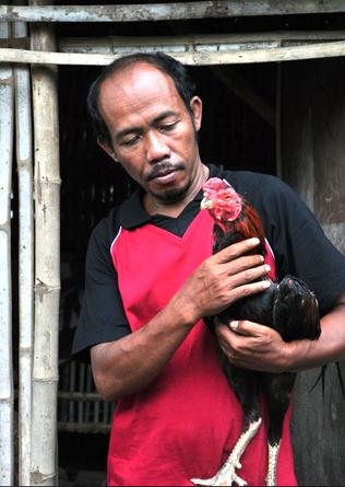 Nardi, Peternak Ayam Bangkok asal madiun.