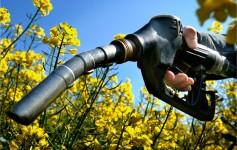 Peluang usaha bahan bakar nabati